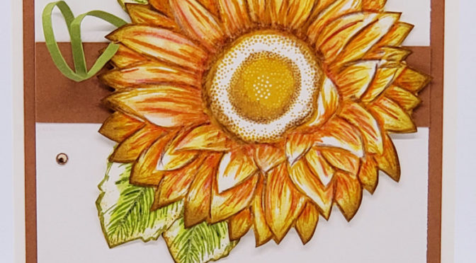 Celebrate Sunflowers & Watercolor Pencils